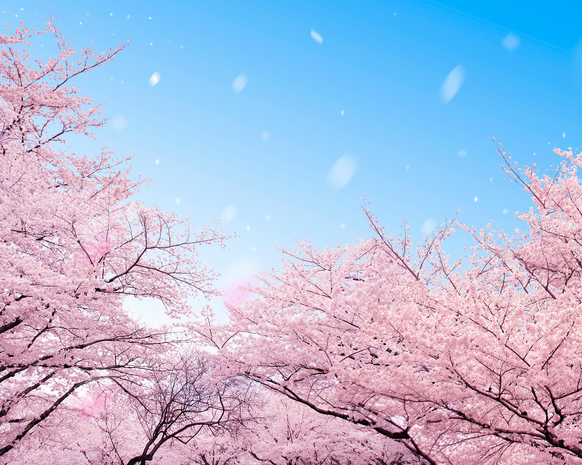 桜の季節 タブレット用 ダウンロード シャープ スマートフォン公式サイト Shshow